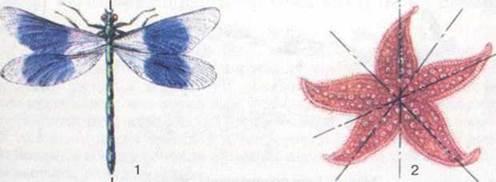 Будова тіла. Опорно-рухова система. Рух тварин - БУДОВА І ЖИТТЄДІЯЛЬНІСТЬ ТВАРИН - Біологія 8 клас - С.В. Межжерін